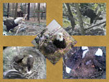 pictures of eaglets from 2010