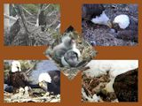 pictures of eaglets from 2014