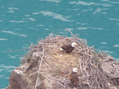 Pinnacle Rock nest